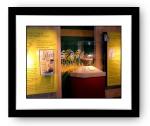 St Catherines Island Collection Exhibit